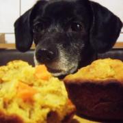 How to: Tort/Cupcakes pentru ziua de naștere a câinelui