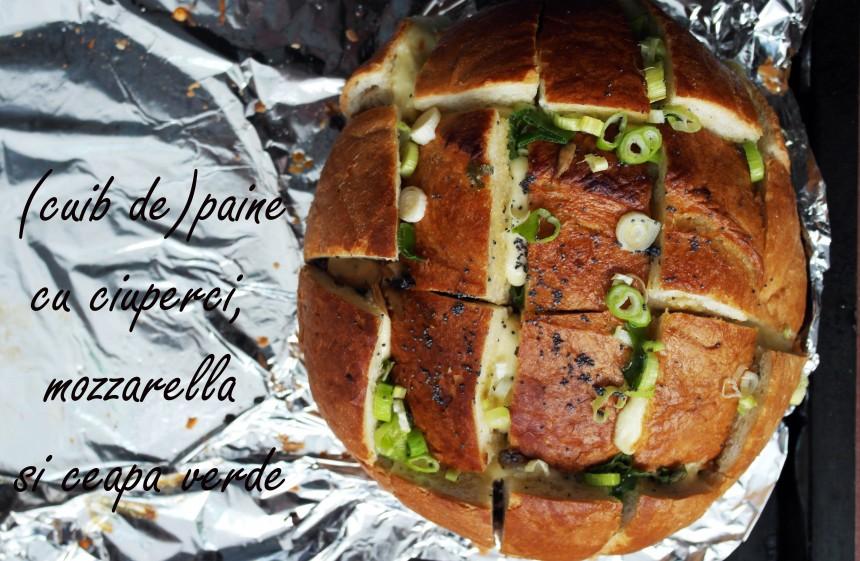 cuib paine