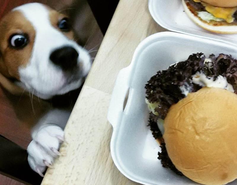 thomas burger