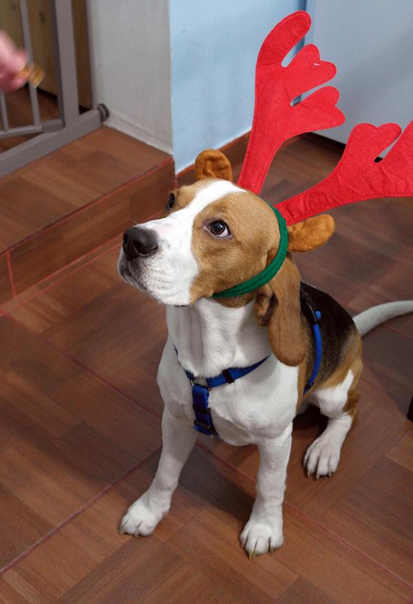 thomas reindeer