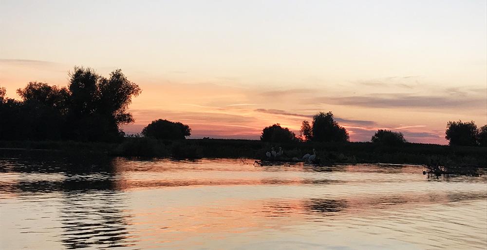 apus in delta